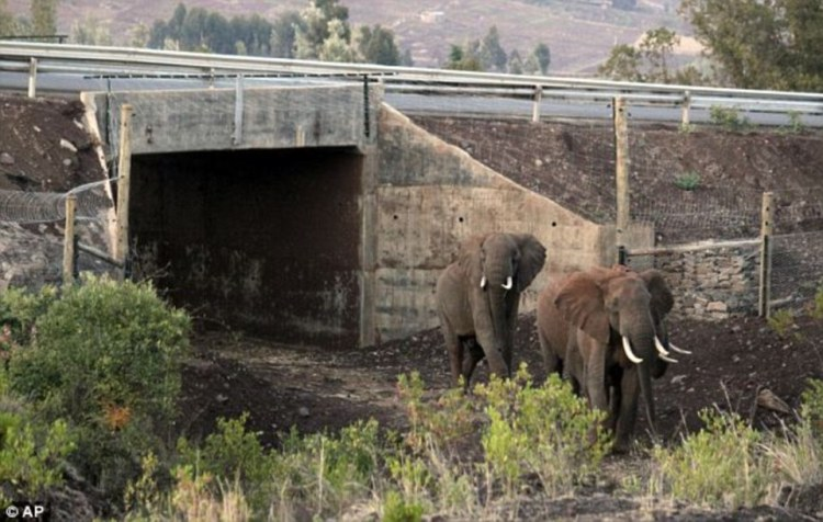 This tunnel connects two wilderness areas in Kenya, allowing elephants to pass between them while avoiding vehicle