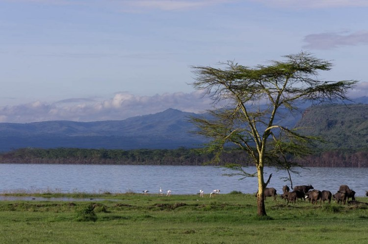 The countless flamingoes on the lake Nakuru are varying depending on the water and food conditions and the best vantage point is from Baboon Cliff.