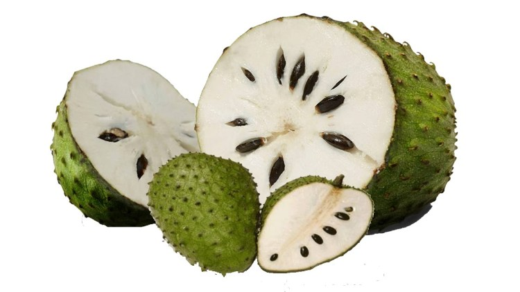 The agressive looking guanábana contains a docile white custard-like and headily perfumed flesh. It is usually made into a paste, ice cream or agua fresca, but can be consumed as is.