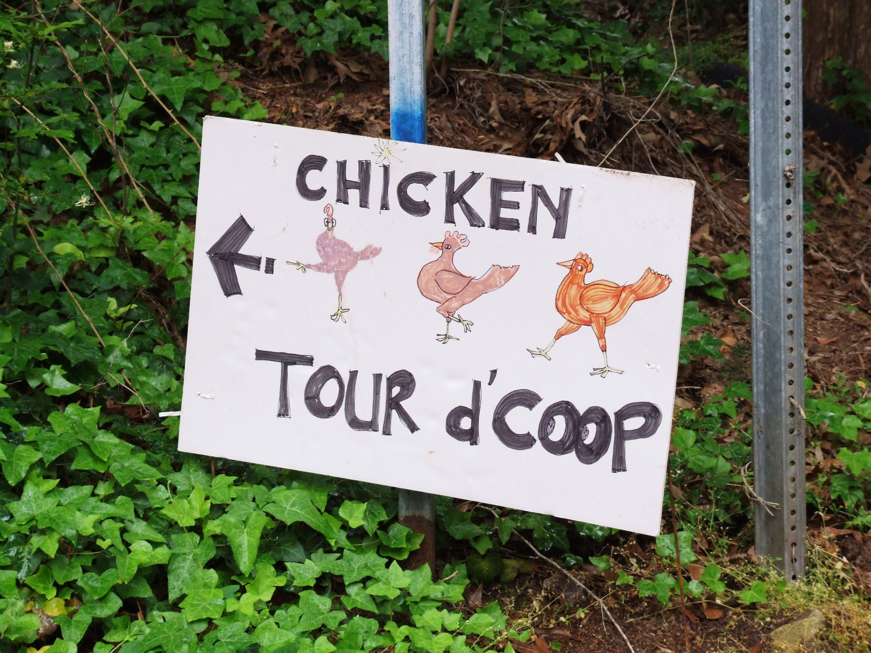 The Tour D'Coop