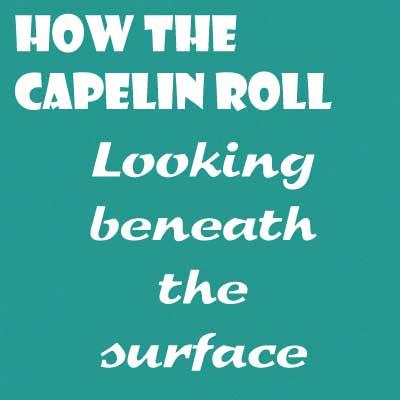 capelin