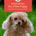 Puppy Extras: Fun Things for a New Puppy