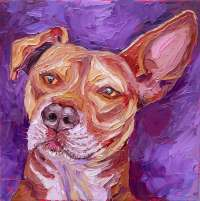 animals pet portraits animals and pet portraits plein air studio oil paintings by Charlene Marsh