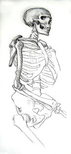 Skeleton,-drawing,-right-side