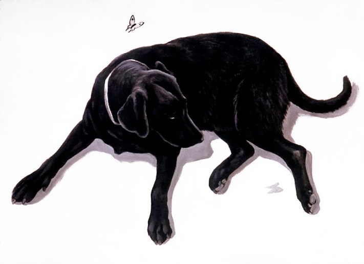 Black Lab, Butterfly and Shadows