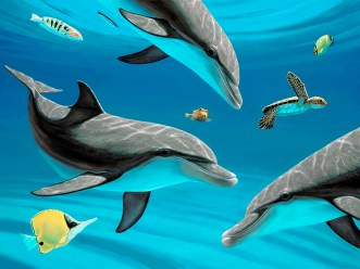 Dolphins and Turtle