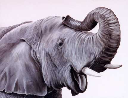 Laughing Elephant