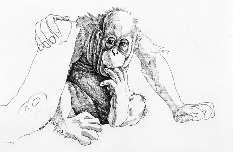 Toe Biting Orangutan Baby