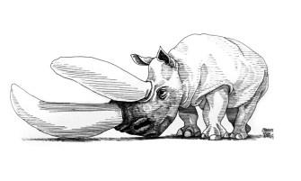 The Really Endangered Species List, Black Rhino