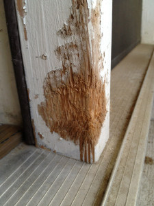 It's a Dog Eat Wall World Out There - How to Repair a Dog Chewed Wall