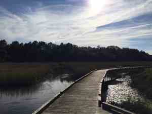 Francis Marion National Forest Sewee Shell Ring Trail - Charleston Crafted