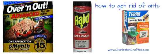 how to get rid of ants - charleston crafted