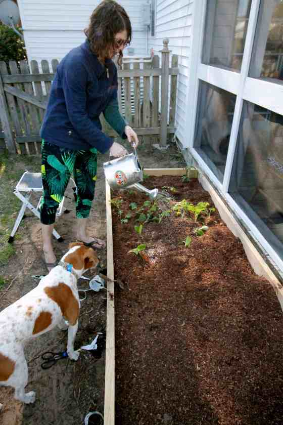 How to build a DIY raised garden bed - Charleston Crafted