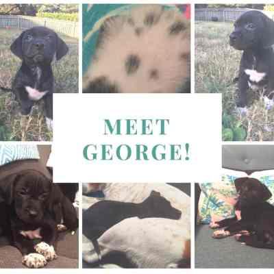 Meet George - Charleston Crafted