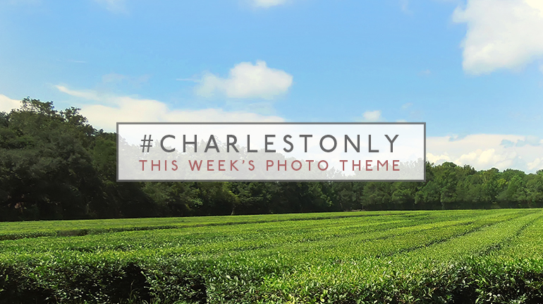 Charlestonly_Tea_Theme2