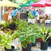 Where + Wear: Charleston Farmers Market