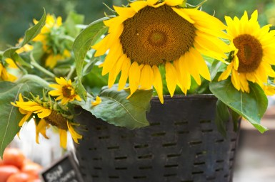 FLOWER FANTASIA: The Saturday morning Farmers Market in Marion Square is a great place to pick up fresh cut flowers.