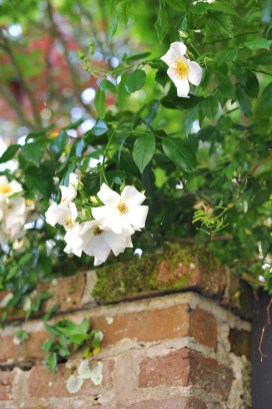 """Charleston truly is a """"city set in a garden."""""""