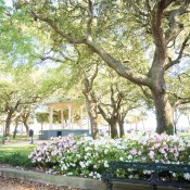 Green Spots & Gourmet Shops in Charleston