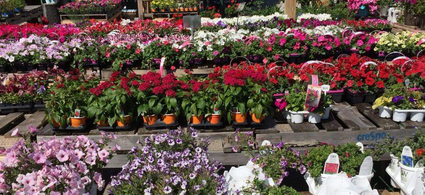 Flowers, Garden Center, Flower, spring