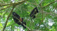 Monkeys near my room