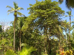 Many Types of Trees