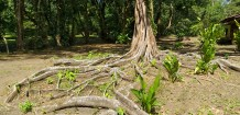 A Broad Base of Roots