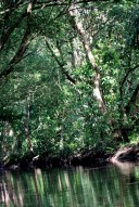 A Rainforest is Trees +