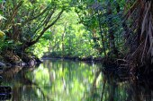Tranquil and green!