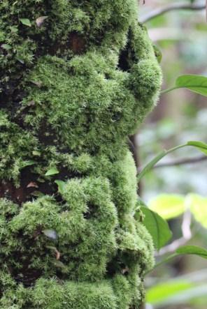 Tree Hosting Moss