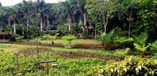 Macaw Lodge Grounds