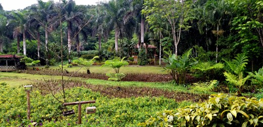 Macaw Lodge Grounds