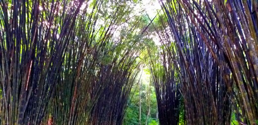 Bamboo Tunnel & 2nd Yoga Platform