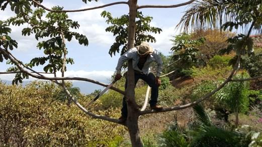 Gardener Trims Limbs from House
