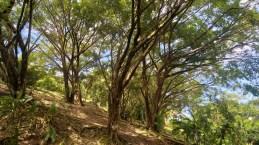 Trees Everywhere!