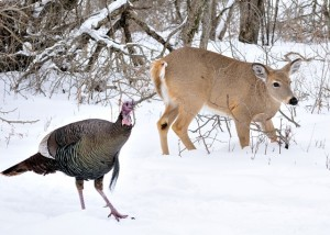 Turkeys and deer are having a tough time. Normal spring weather needs to arrive soon.