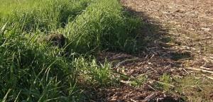 grass setup 2 (1024x493)