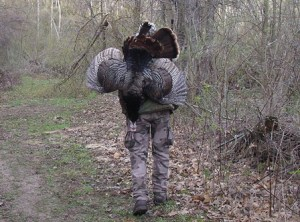 Wisconsin 2015 Spring Turkey Harvest Down 1.29%