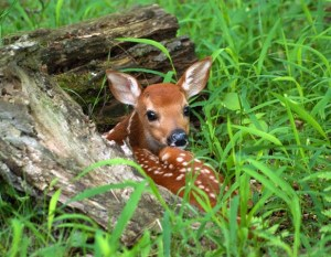 The Death of Fawn Named Giggles