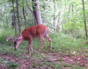 You never know what you'll see on a summertime stroll in a Wisconsin Woodland