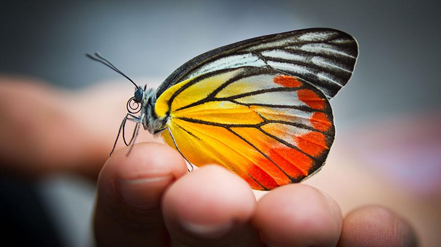 Vlindervriendschap