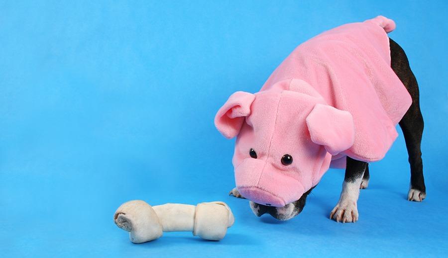 """""""Waarom aanbidden we honden en katten, maar zetten we onze tanden in koeien en varkens?"""""""