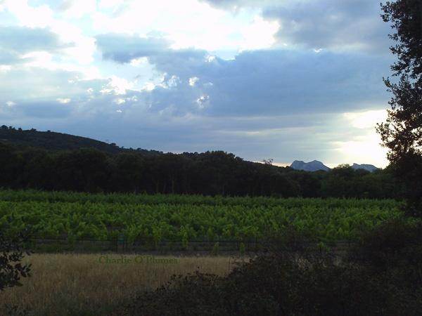 douceur paysage colline montagne vigne ciel nuages