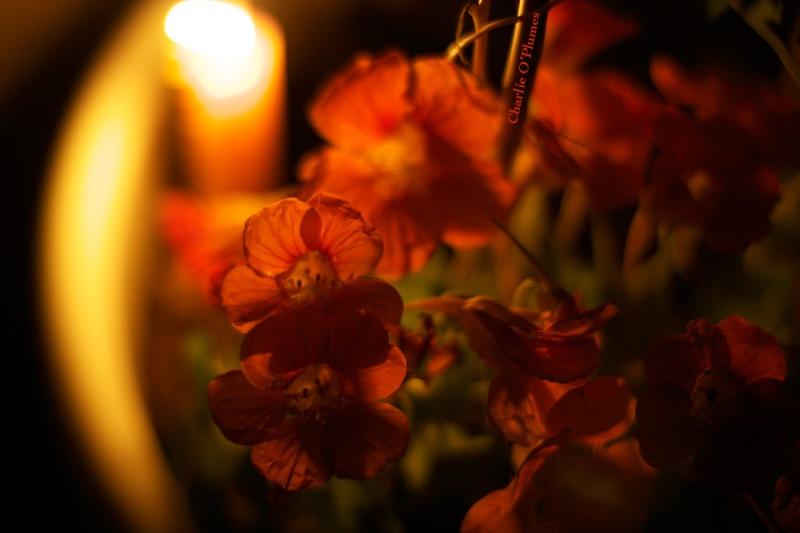 capucine lumière parisienne changement de vie provence campagne