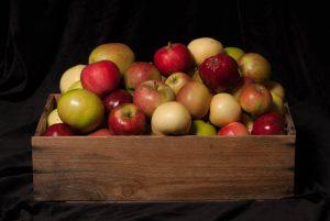 31 sorters äpplen