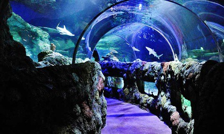 Admission for One Child or Adult to SEA LIFE (Up to 18% Off)