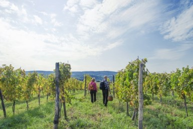 senior couple walking through a vineyard