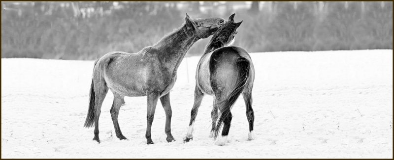Horse Care in Charlottesville VA Cold Weather