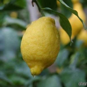 Limone Sorrento IGP