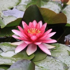 Orto Botanico, bellezze floreali (photo Federica Rispoli)